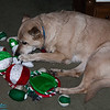 Smokey with her toys.