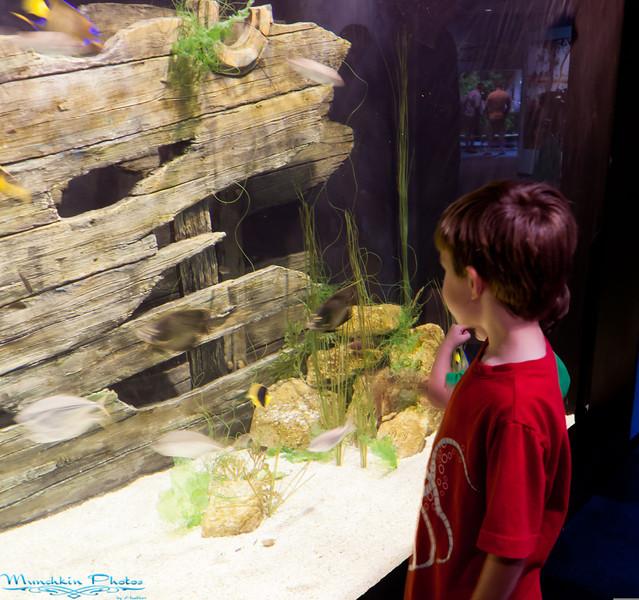 Ethan looking at an aquarium display