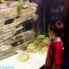 Ethan looking at an aquarium display