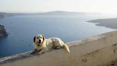 Dog in Ia