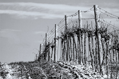 The Fallow Season I don't do much Black and White.  This shot benefited from the stark contrast.  Vineyard on the Eastern border of Austria.