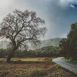 China Camp Road and Oak