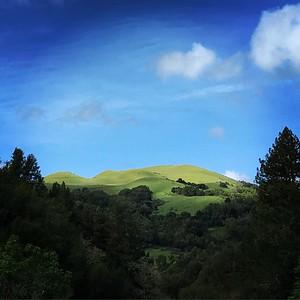 Mt Tam Ridge