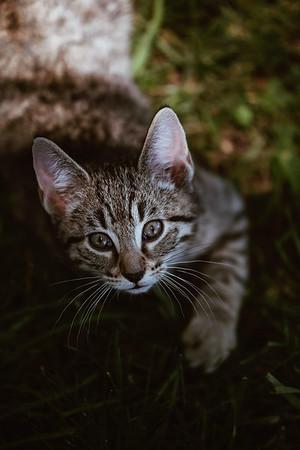 Girls & Kittens, July 1st - 21