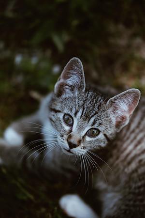 Girls & Kittens, July 1st - 1