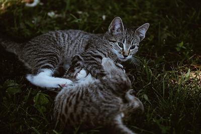 Girls & Kittens, July 1st - 17