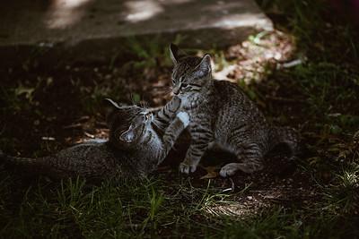 Girls & Kittens, July 1st - 19
