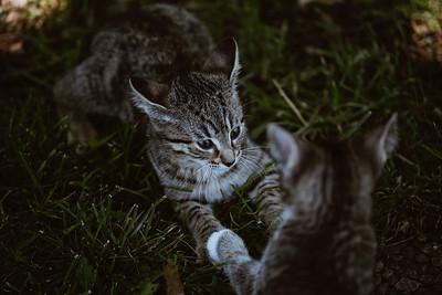 Girls & Kittens, July 1st - 15