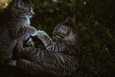 Girls & Kittens, July 1st - 16