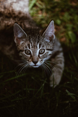 Girls & Kittens, July 1st - 22