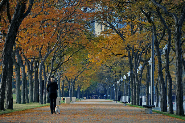 From The Gallery 'Chicago' The Photo 'Autumn In Olive Park'
