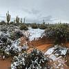 Desert Rivulette