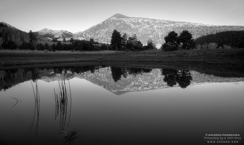 Lockett Meadow Tank Reeds