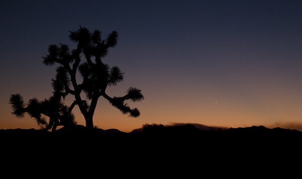 Sunset, Joshua Trees, wildfire smoke and the moon. Joshua Tree National Park, CA