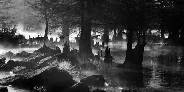 "Beaver's Bend State Park. This was taken when the water was fairly low. I had to wade out into the stream with my gear to take this shot. It was early morning and about 40 degrees out. The cypress trees' roots rise from the ground forming ""knees"" - in this shot I imagine them being like people or ghosts wanding through the mist, creating an eerie atmosphere in the quiet morning."