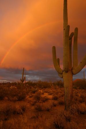SaguaroNP_CRW_1115_060301_