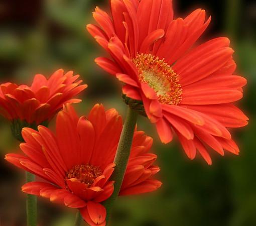 Flowers31 IMG_0533 Edited