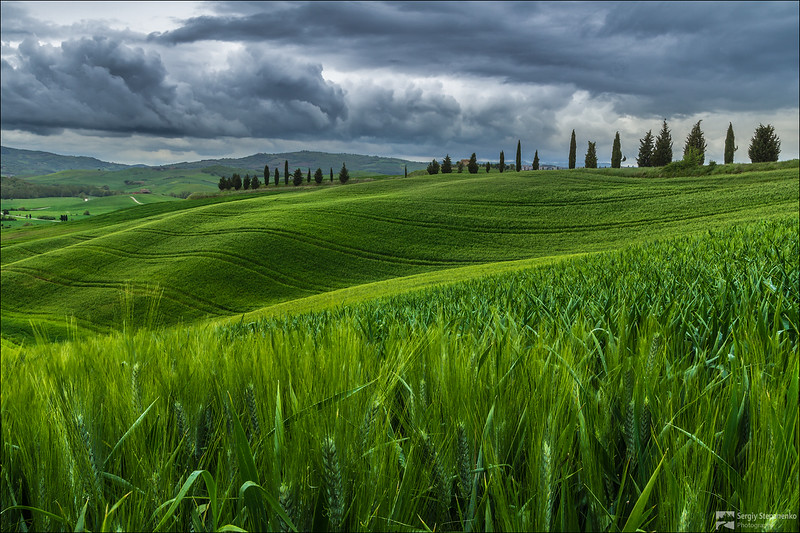 Among Tuscany Fields | В полях Тосканы