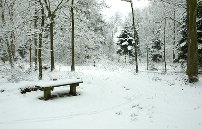 Lonely, snow covered bench in the forrest.