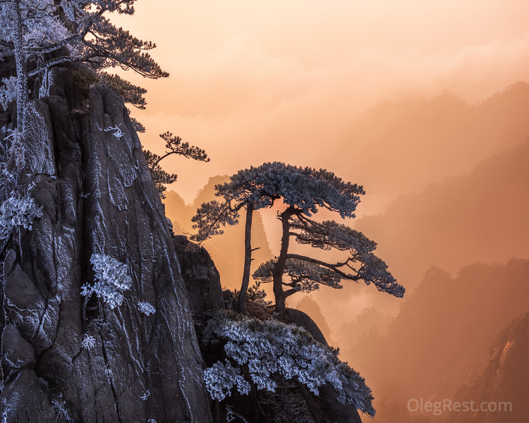 Single tree in the Huangshan