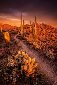 Saguaro Light & Color