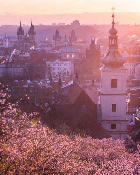 Blooming Prague