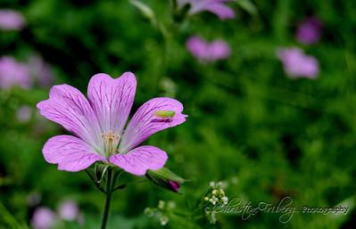 day144_flower