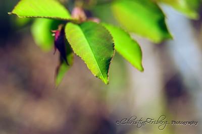 day118_tree