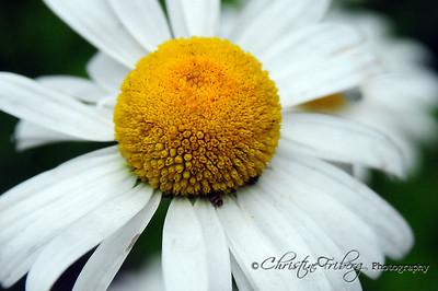 day162_daisy