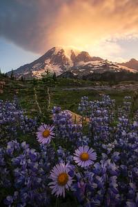 A beautiful sunrise at Mt Rainier - Washington