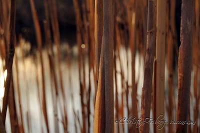 day80_pond