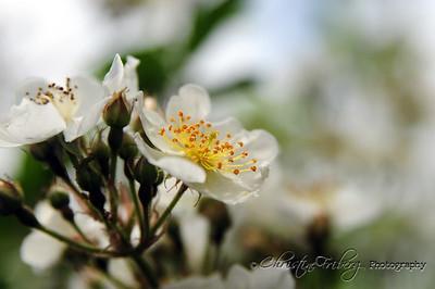 day169_flowerbud