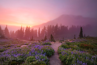 Pink Nights on Mt Rainier