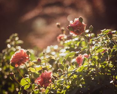 Inspiration Garden - Transformation