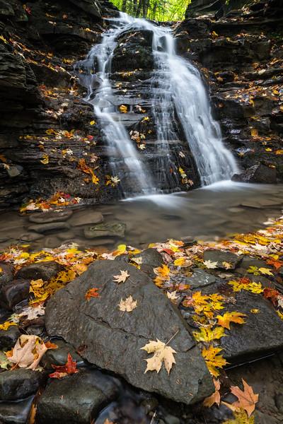 Autumn in New York