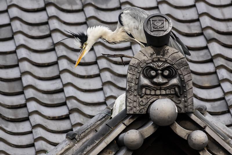 Himeji Heron