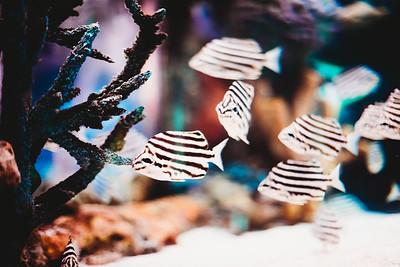 SuzysSnapshots_SeaLife-1543