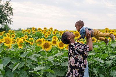 SuzysSnapshots_Sunflowers_Brittany-6106