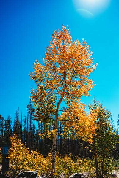 SuzysSnapshots_ColoradoRiver-4963