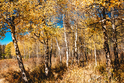 SuzysSnapshots_ColoradoRiver-4939
