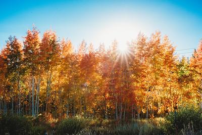 SuzysSnapshots_ColoradoRiver-5254