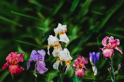 SuzanneFryerPhotography_Flowers-3