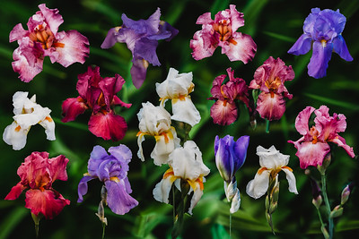 SuzanneFryerPhotography_Flowers-4