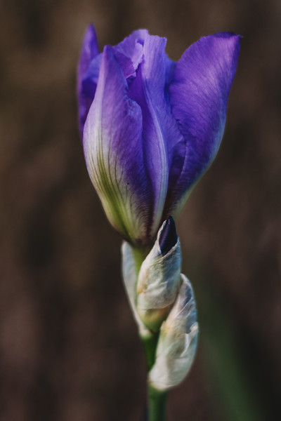 SuzanneFryerPhotography_Flowers-7162