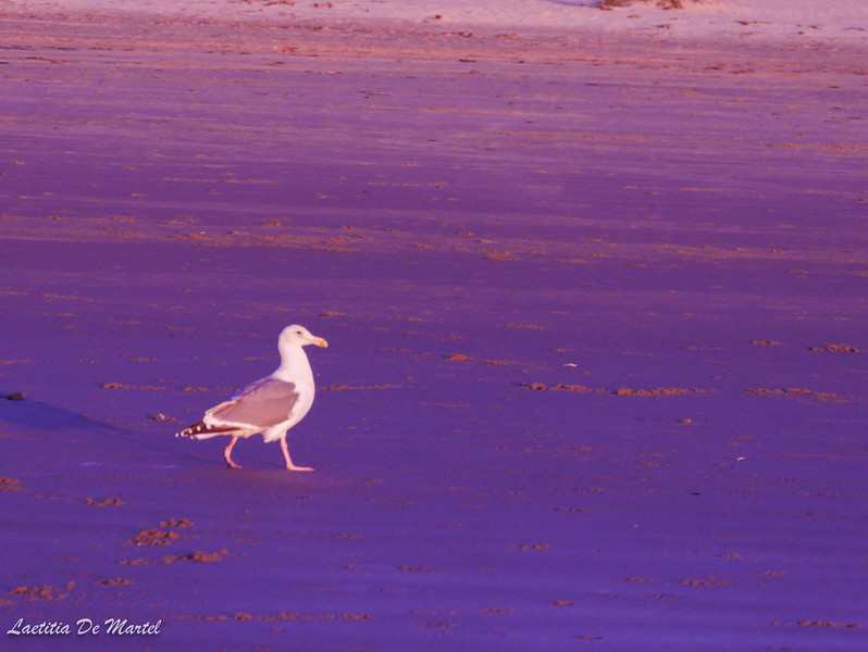 Seagull by Laetitia