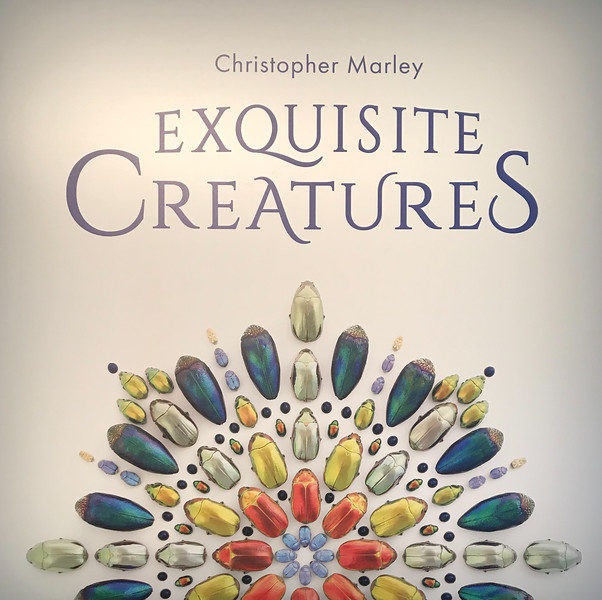 Exquisite Creatures at OMSI