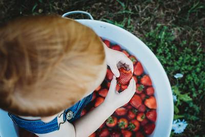 SuzysSnapshots_McClungStrawberryFruitBath-1335
