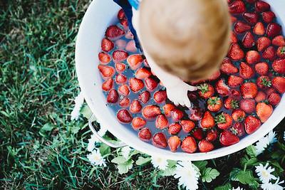 SuzysSnapshots_McClungStrawberryFruitBath-1365