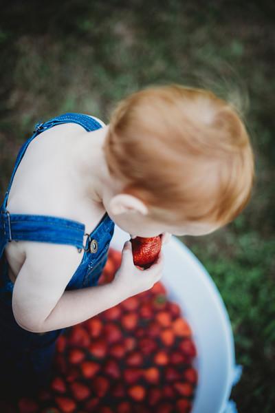 SuzysSnapshots_McClungStrawberryFruitBath-1263