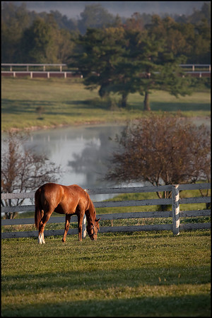 Horse farm near Old Frankfort Pike in Lexington, Kentucky